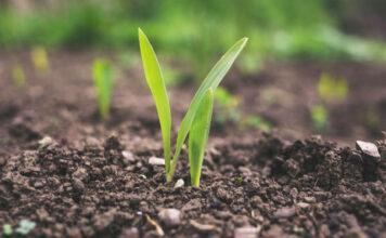 Regulowanie wzrostu roślin